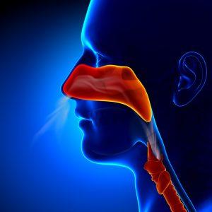 Sinus and upper respiratory ract